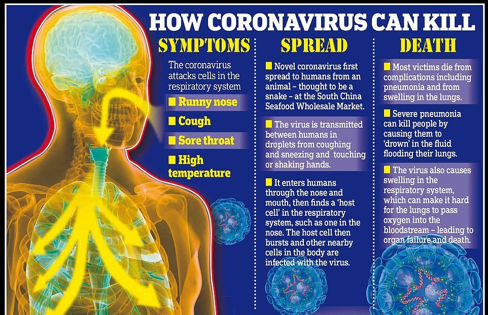 Coronavirus Spread, Symptoms, Treatment