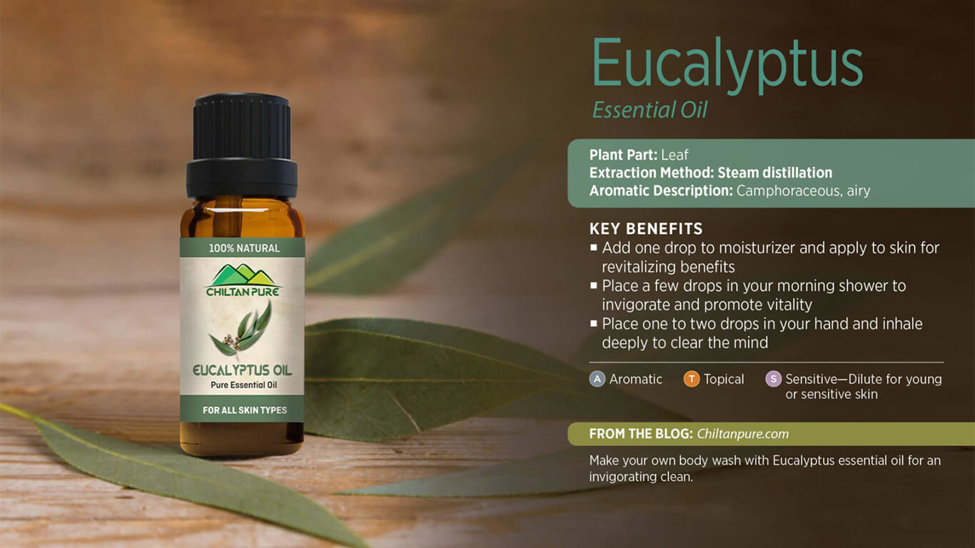 4 Amazing Eucalyptus Oil Benefits You Need to Know