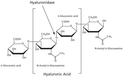 hyaluronic acid structure