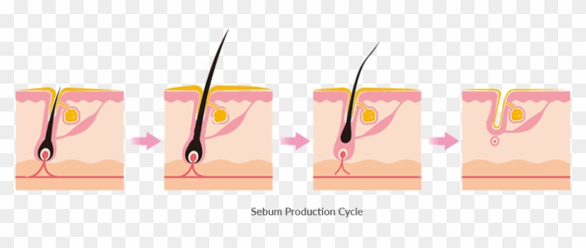 sebum production with glycerin